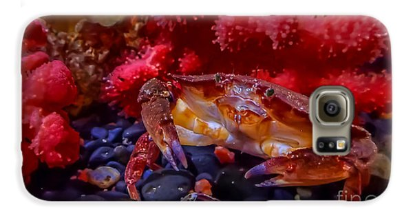Dungeness Crab Galaxy S6 Case