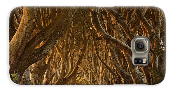 Colours Galaxy S6 Case - Early Morning Dark Hedges by Derek Smyth