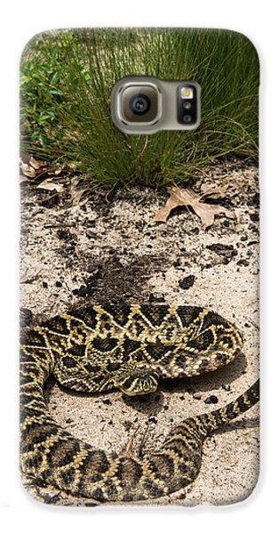 Eastern Diamondback Rattlesnake Galaxy S6 Case by Pete Oxford