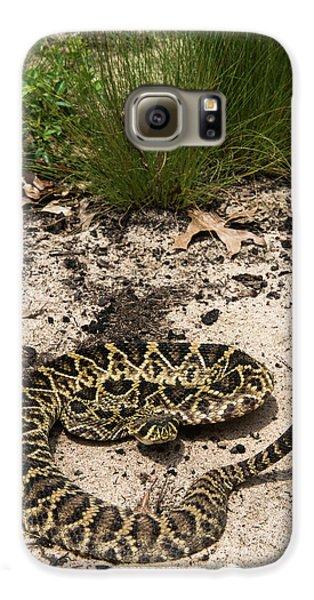 Eastern Diamondback Rattlesnake Galaxy S6 Case