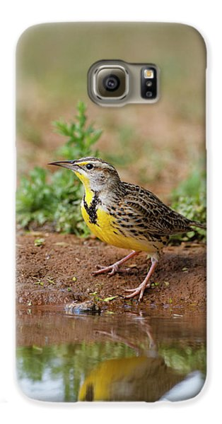 Meadowlark Galaxy S6 Case - Eastern Meadowlark (sturnella Magna by Larry Ditto