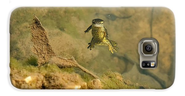 Eastern Newt In A Shallow Pool Of Water Galaxy S6 Case by Chris Flees