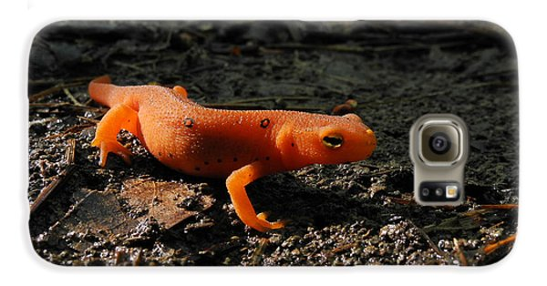 Eastern Newt Red Eft Galaxy S6 Case
