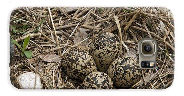 Killdeer Galaxy S6 Case - Eggs In Killdeer Nest by Linda Freshwaters Arndt