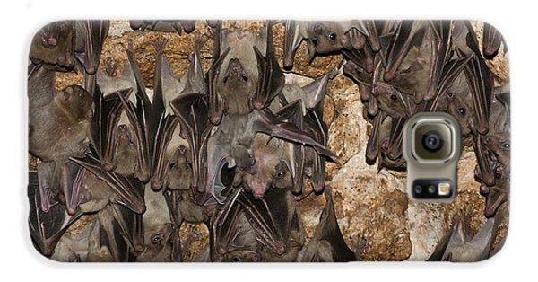 Egyptian Fruit Bat Rousettus Aegyptiacus Galaxy S6 Case by Photostock-israel