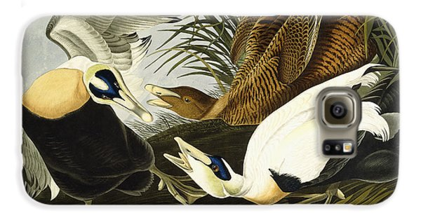 Eider Ducks Galaxy S6 Case by John James Audubon
