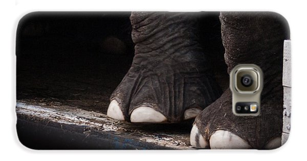 Elephant Toes Galaxy S6 Case by Bob Orsillo