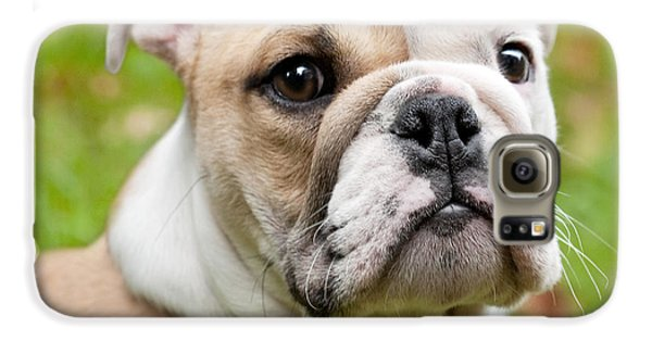 Dog Galaxy S6 Case - English Bulldog Puppy by Natalie Kinnear