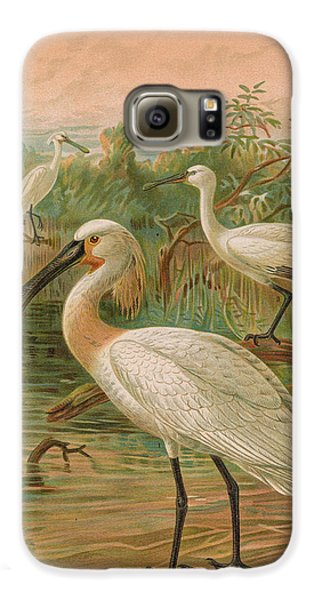 Eurasian Spoonbill Galaxy S6 Case by Rob Dreyer