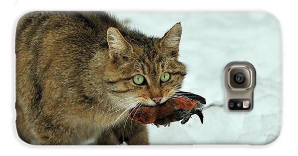 European Wildcat Galaxy S6 Case