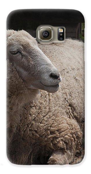 Ewe Galaxy S6 Case