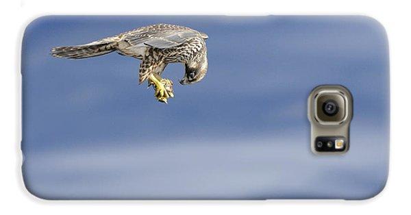 Falcon With Prey Galaxy S6 Case