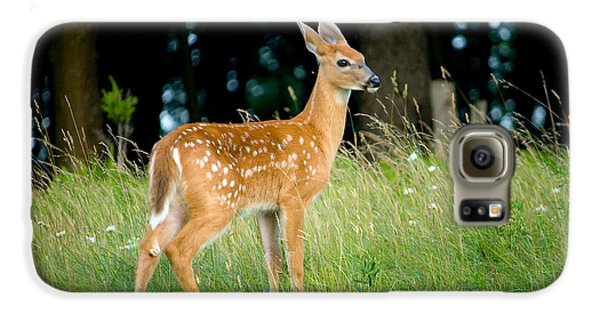 Fawn Galaxy S6 Case by Shane Holsclaw