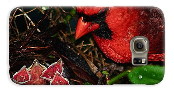 Bluejay Galaxy S6 Case - Feed Me Daddy by Frozen in Time Fine Art Photography