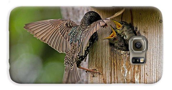 Feeding Starlings Galaxy S6 Case by Torbjorn Swenelius
