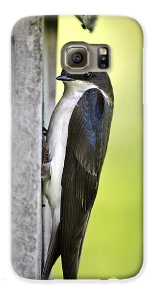 Tree Swallow On Nestbox Galaxy S6 Case by Christina Rollo