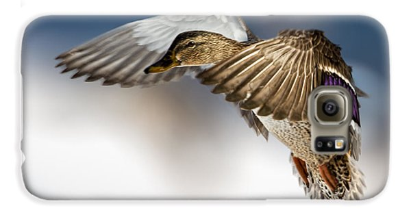 Duck Galaxy S6 Case - Flight Of The Mallard by Bob Orsillo