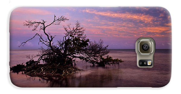 Mangrove Galaxy S6 Case - Florida Mangrove Sunset by Mike  Dawson