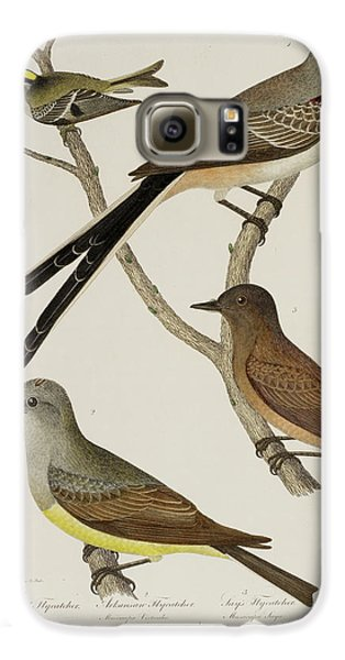 Flycatcher And Wren Galaxy S6 Case