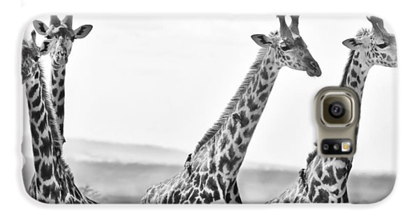 Four Giraffes Galaxy S6 Case by Adam Romanowicz