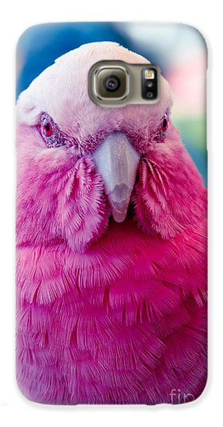 Galah - Eolophus Roseicapilla - Pink And Grey - Roseate Cockatoo Maui Hawaii Galaxy S6 Case by Sharon Mau