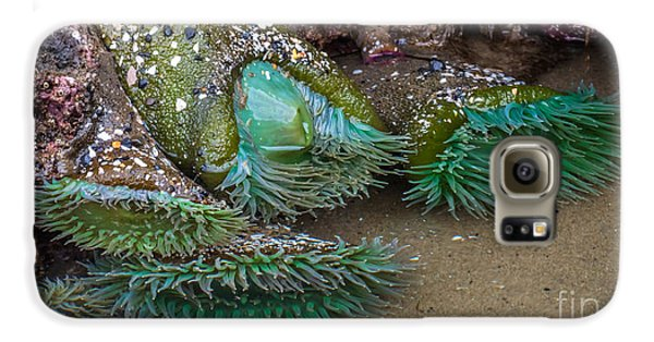 Giant Green Anemone Galaxy S6 Case