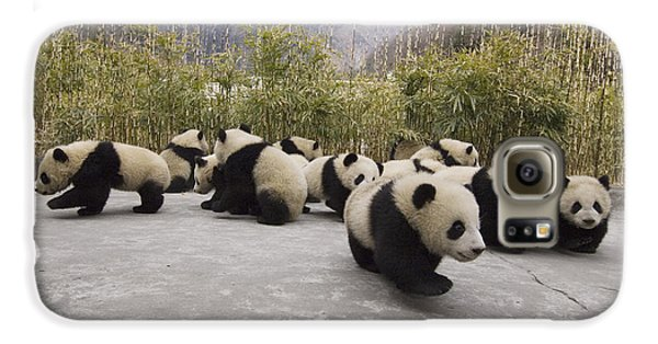 Giant Panda Cubs Wolong China Galaxy S6 Case