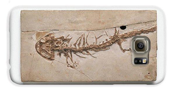 Salamanders Galaxy S6 Case - Giant Salamander Fossil by Dorling Kindersley/uig