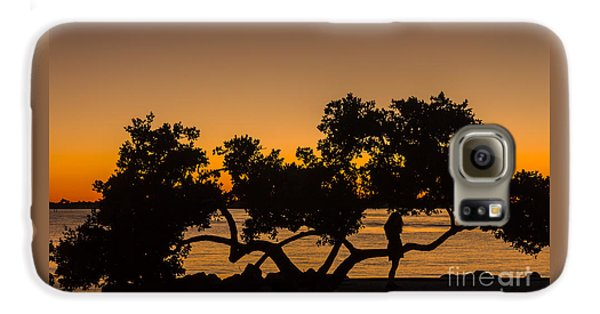 Mangrove Galaxy S6 Case - Girl And Tree by Marvin Spates