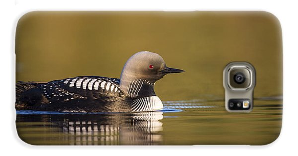 Glassy Waters And A Pacific Loon Galaxy S6 Case by Tim Grams