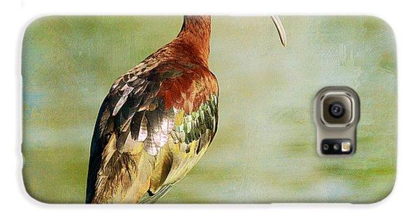 Glossy Ibis Galaxy S6 Case by Fraida Gutovich