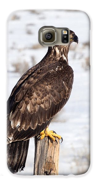 Golden Eagle On Fencepost Galaxy S6 Case