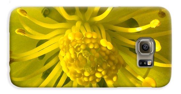 Golden Hellebore Glory Galaxy S6 Case