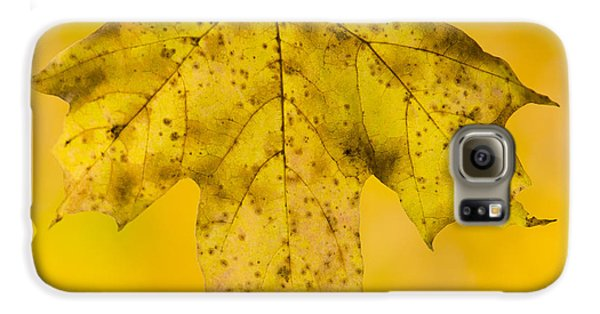 Galaxy S6 Case featuring the photograph Golden Maple Leaf by Sebastian Musial