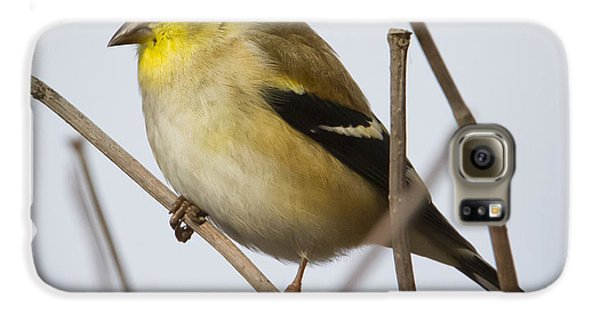 Galaxy S6 Case featuring the photograph Goldfinch In It's Winter Coat by Ricky L Jones