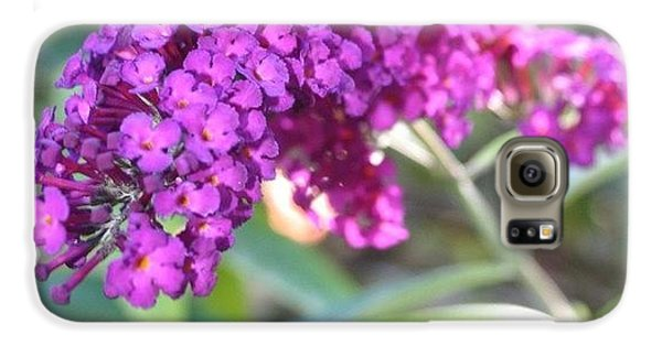 Edit Galaxy S6 Case - Good Morning Purple Butterfly Bush by Anna Porter