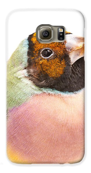 Gouldian Finch Erythrura Gouldiae Galaxy S6 Case by David Kenny