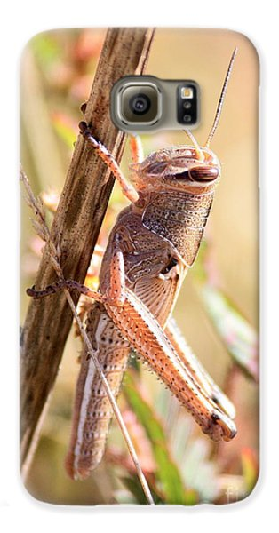 Grasshopper In The Marsh Galaxy S6 Case by Carol Groenen