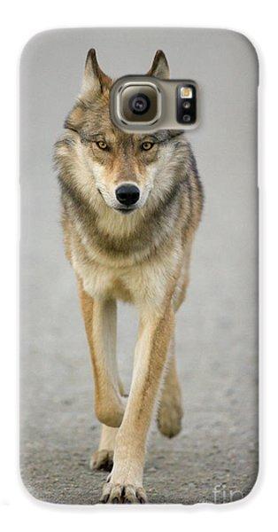 Gray Wolf Denali National Park Alaska Galaxy S6 Case