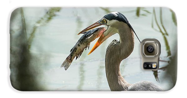 Great Blue Heron With Fish In Mouth Galaxy S6 Case by Sheila Haddad