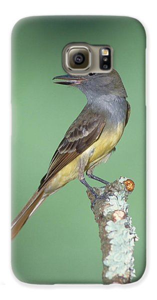 Great Crested Flycatcher Myiarchus Galaxy S6 Case