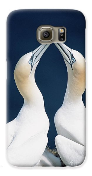 Greeting Northern Gannets Canada Galaxy S6 Case by