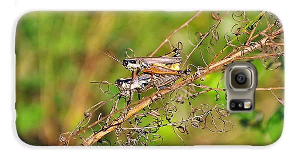 Gregarious Grasshoppers Galaxy S6 Case by Al Powell Photography USA