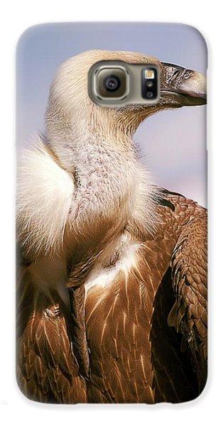 Griffon Vulture (gyps Fulvus) Galaxy S6 Case