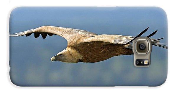 Griffon Vulture In Flight Galaxy S6 Case
