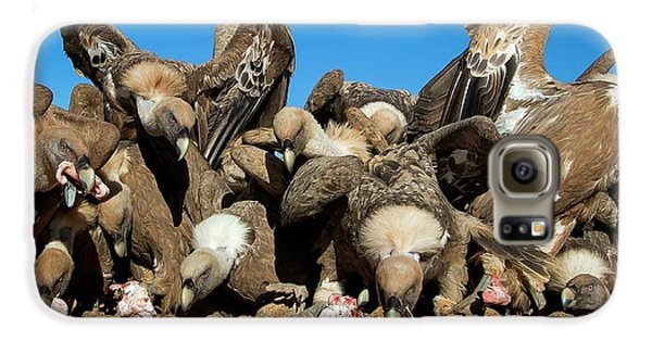 Griffon Galaxy S6 Case - Griffon Vultures Feeding by Nicolas Reusens