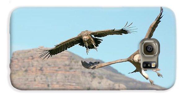 Griffon Galaxy S6 Case - Griffon Vultures Flying by Nicolas Reusens