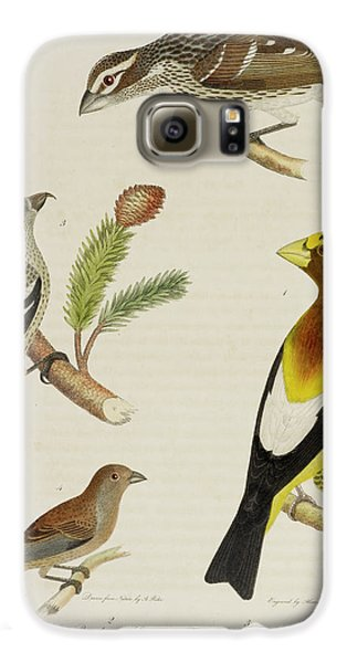Grosbeak And Crossbill Galaxy S6 Case by British Library