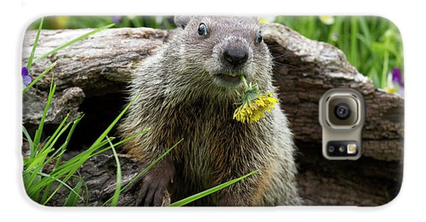 Groundhog  Kit Marmota Monax Galaxy S6 Case by Debbie Dicarlo