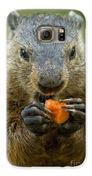 Groundhogs Favorite Snack Galaxy S6 Case by Paul W Faust -  Impressions of Light